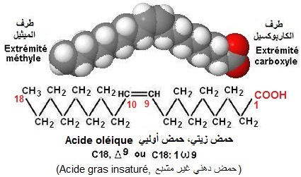 Acide gras insaturé (acide oléique)