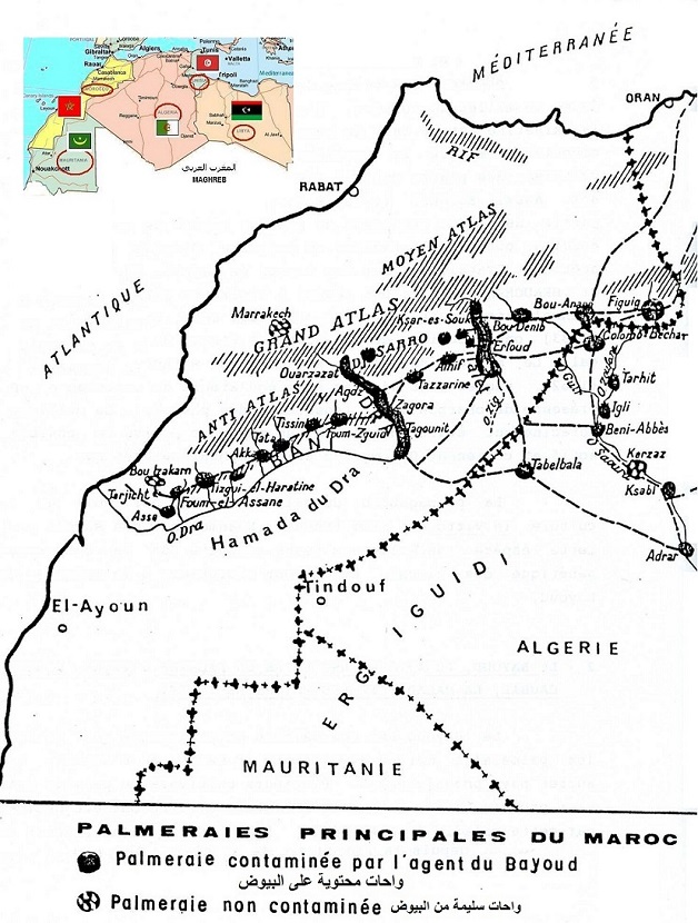 Bayoud disease. Morocco map