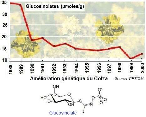 Colza. Glucosinolates