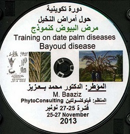 Date palm training