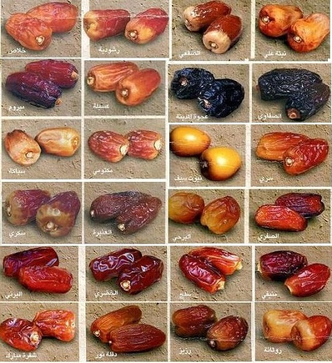 Genetic diversity of date palm (cultivars)